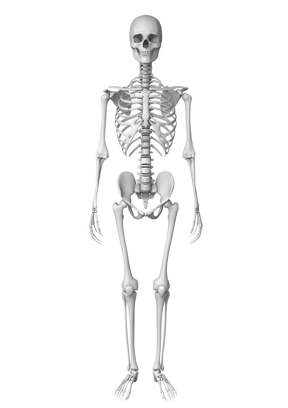 The Color Club - Bones Front view